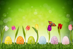 Easter eggs with tulips. Easter eggs and tulips in front of green background Stock Images