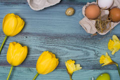Easter eggs and tulips over blue wooden table. Top view. royalty free stock photo