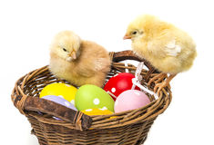 Easter eggs and two newborn chickens Stock Photography