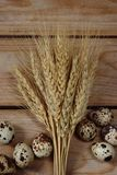 Easter eggs with wheat spikelets on the boards Stock Photos