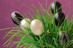 Easter eggs. Easter white and black eggs with ornaments in green spring grass, purple background Royalty Free Stock Photography