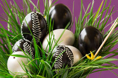 Easter eggs. Easter white and black eggs with ornaments in green spring grass, purple background Stock Photography