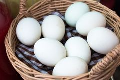 Easter eggs.White duck eggs in basket.Closed up royalty free stock photo