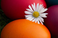 Easter eggs and white flower Stock Photos