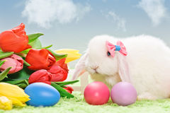 Easter eggs and white rabbit Royalty Free Stock Images