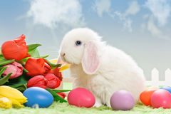 Easter eggs and white rabbit Stock Photo