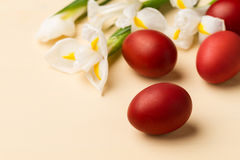 Easter eggs in the whitish nest and white flowers. On the beige table Stock Photos