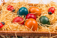 Easter eggs in wicker basket on white Stock Images