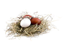 Easter eggs and willow catkins in nest on white Stock Photography