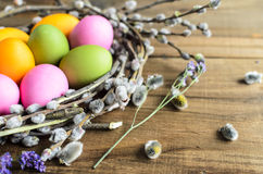 Easter eggs in willow nest, flowers over wooden rustic background Royalty Free Stock Image