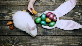 Easter eggs on wooden background. Close up of a boy`s hand that feed hare with carrot on a wooden table with Easter eggs. Happy Easter spring time. Rabbit with stock footage