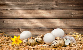 Easter eggs on wooden background. Easter eggs on old wooden background with copy space for your message Stock Photography
