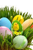 Easter eggs and a yellow chicken in the green grass Royalty Free Stock Photography
