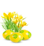 Easter eggs and yellow crocuses Stock Photos