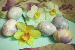Easter eggs with yellow daffodils on turquoise background Stock Image