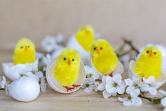 Easter eggs and yellow easter chickens in basket Royalty Free Stock Photos