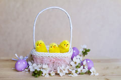 Easter eggs and yellow easter chickens in basket Stock Photography