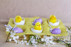Easter eggs and yellow easter chickens in basket Stock Images