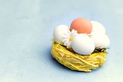 Easter Eggs in Yellow Nest Easter Background Greetibg Card Copy Space Flowers Easter Food Concept Stock Images