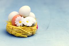 Easter Eggs in Yellow Nest Easter Background Greetibg Card Copy Space Flowers Easter Food Concept Royalty Free Stock Photos