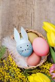 Easter eggs and yellow tulips on wooden background.  Stock Images
