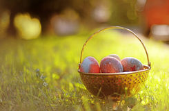 Easter egss on the morning Royalty Free Stock Photo