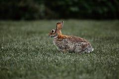 Easter för gullig päls- kaninkanin utomhus- löst Arkivfoto