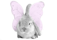 Easter fairy Stock Photography