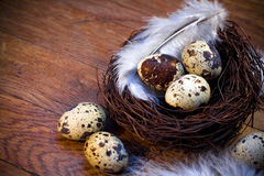 Easter feather eggs Stock Photo