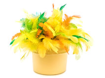 Easter feathers Royalty Free Stock Image