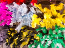 Easter feathers Stock Photos