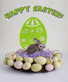 Easter feliz Fotografia de Stock Royalty Free
