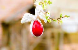 Easter feliz Fotos de Stock