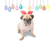Easter feliz Persiga as orelhas vestindo do coelho do coelho do Pug que sentam-se perto dos ovos coloridos pasteis com espaço da  Fotos de Stock Royalty Free
