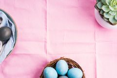 Easter festive banner for text with eggs on pink. Easter festive banner for text with blue boiled eggs on pink table cloth with succulent plant. Flat lay banner royalty free stock photo