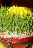 Easter flower decoration Stock Photo