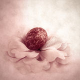 Easter flower. Easter egg. Stock Images