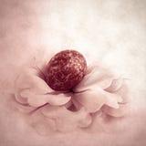 Easter flower. Easter egg. Stock Images