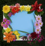 Easter Flower Frame stock image