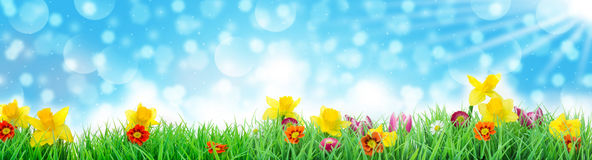 Easter, Flower Meadow in front of sky, Banner Stock Photos