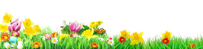 Easter, Flower Meadow, isolated, Banner. Flower Meadow for easter, isolated as Banner stock image