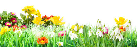 Easter, Flower Meadow, isolated, Banner. Flower Meadow for easter, isolated as Banner stock images