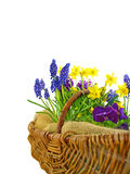 Easter flowers basket Stock Photos