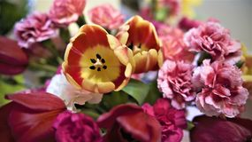 Easter flowers bring may showers. Some pretty pink flowers at Easter time. Variety of Mums Stock Photos