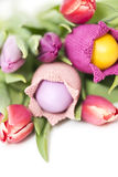 Easter flowers Stock Images