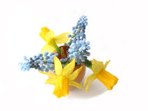 Easter flowers in egg shell Royalty Free Stock Image