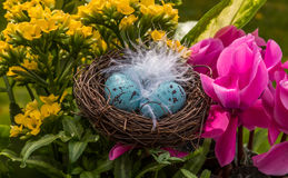 Easter flowers with eggs. Shallow focus on Easter eggs in a feathered nest surrounded by a flower arrangement Royalty Free Stock Photos