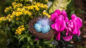 Easter flowers with eggs. Shallow focus on Easter eggs in a feathered nest surrounded by a flower arrangement Royalty Free Stock Images