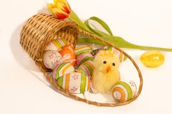 Easter fluffy chicling and eggs royalty free stock photo