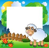 Easter frame with sheep on meadow Royalty Free Stock Image